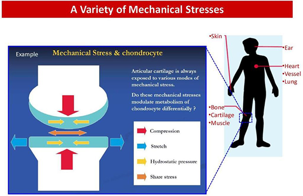 a variety of mechanical stresses